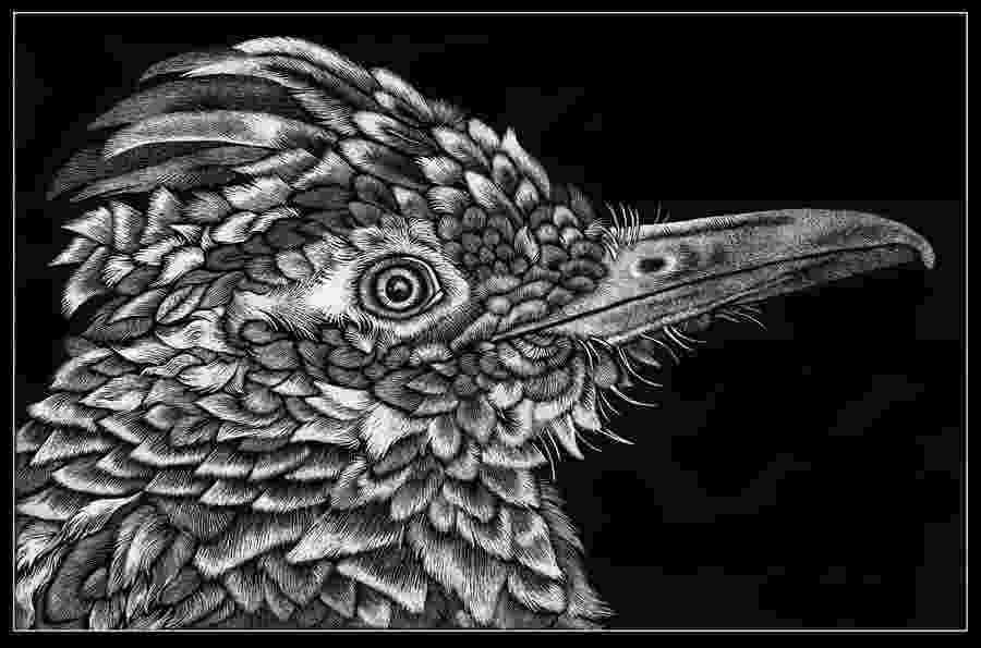 new mexico state bird new mexico state bird by mitziebgood on deviantart state bird mexico new