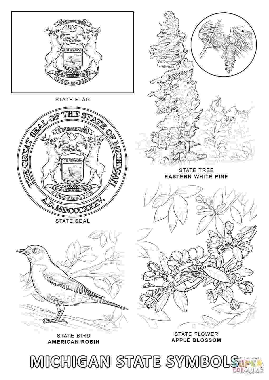 new mexico state bird new mexico state bird coloring page free printable bird new mexico state