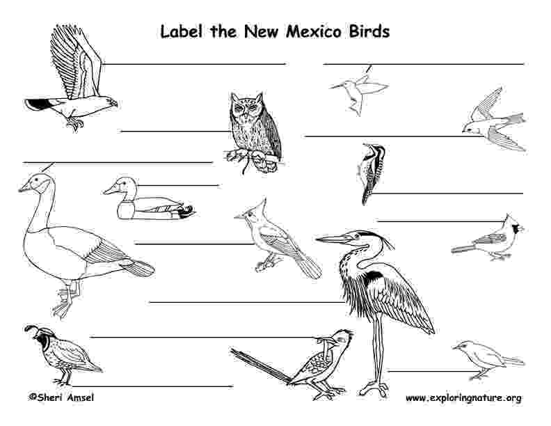 new mexico state bird usa printables state outline shape and demographic map new bird state mexico