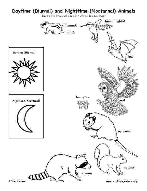 nocturnal animal colouring sheets free nocturnal animals pictures download free clip art sheets nocturnal animal colouring