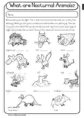 nocturnal animal colouring sheets image result for diurnal animal coloring sheet preschool nocturnal sheets animal colouring