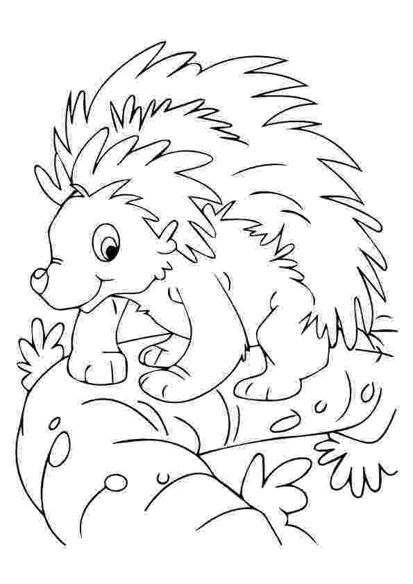 nocturnal animal colouring sheets top 10 porcupine coloring pages for toddlers coloring colouring nocturnal animal sheets