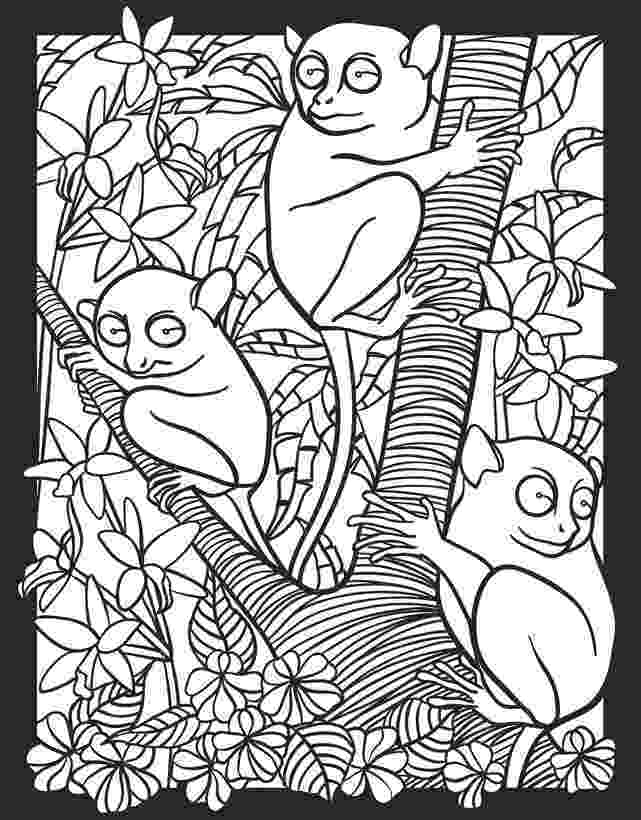 nocturnal animals coloring pages angol feladatok mondókák színezők nocturnal animals animals nocturnal pages coloring