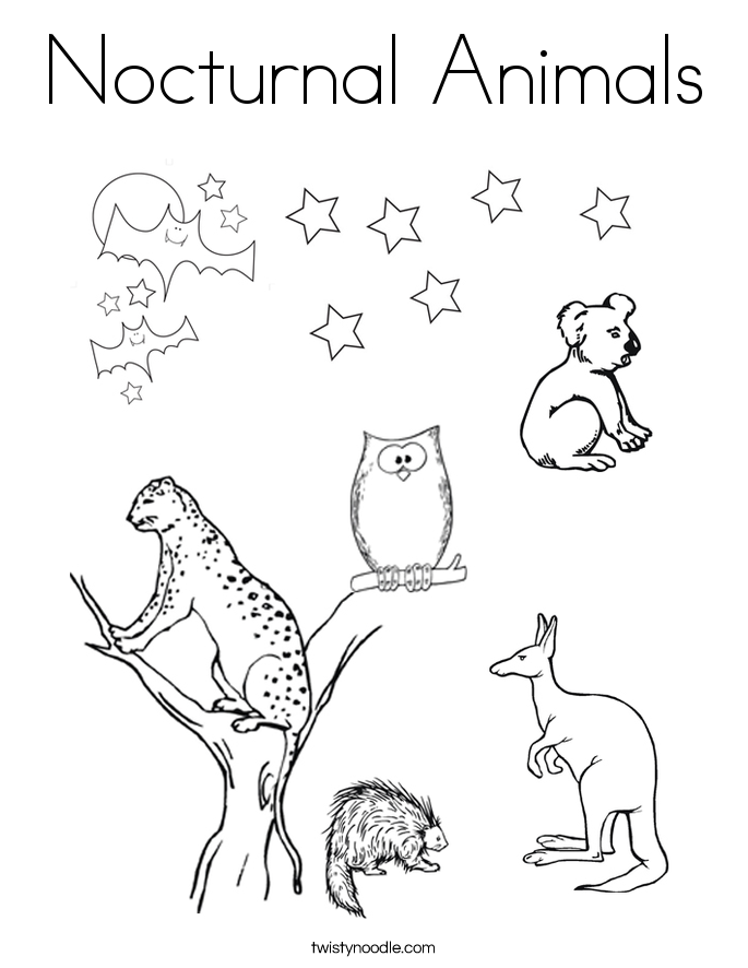 nocturnal animals coloring pages childhood education nocturnal animals coloring pages free animals pages nocturnal coloring