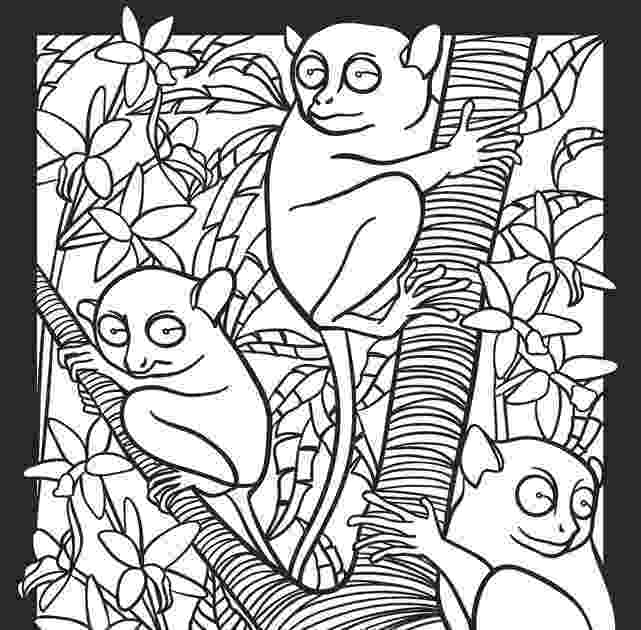 nocturnal animals coloring pages childhood education nocturnal animals coloring pages free nocturnal animals pages coloring