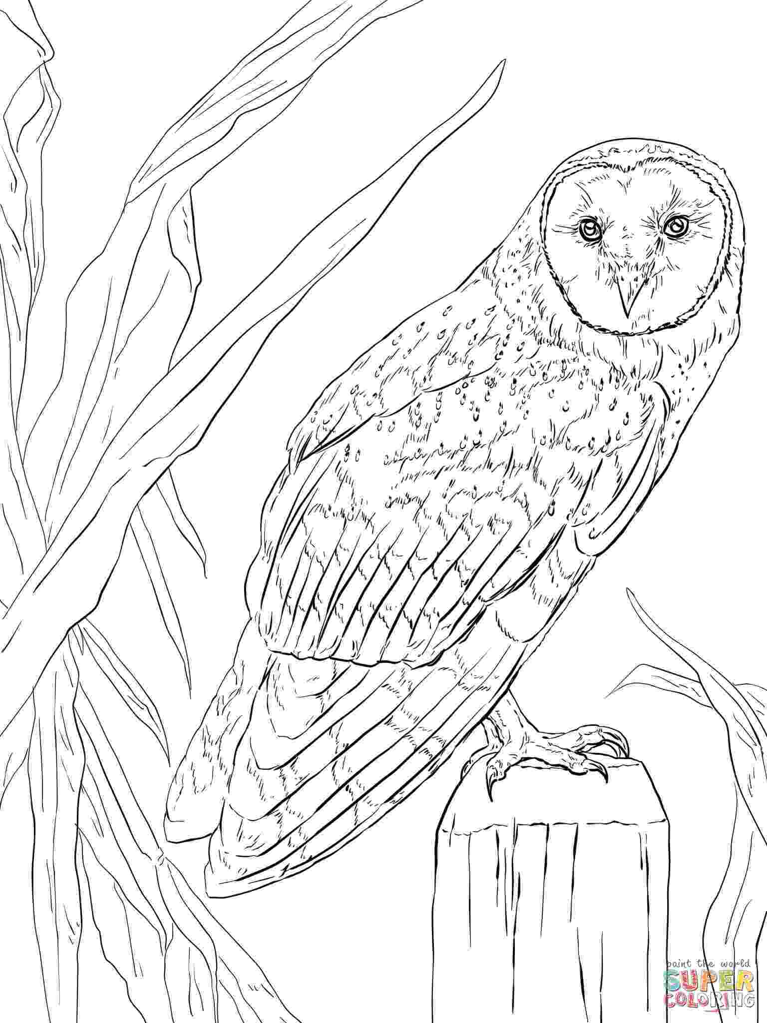 nocturnal animals coloring pages free pictures of nocturnal animals download free clip art animals pages coloring nocturnal