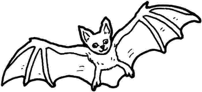 nocturnal animals coloring pages pictures of nocturnal animals clipartsco animals pages nocturnal coloring