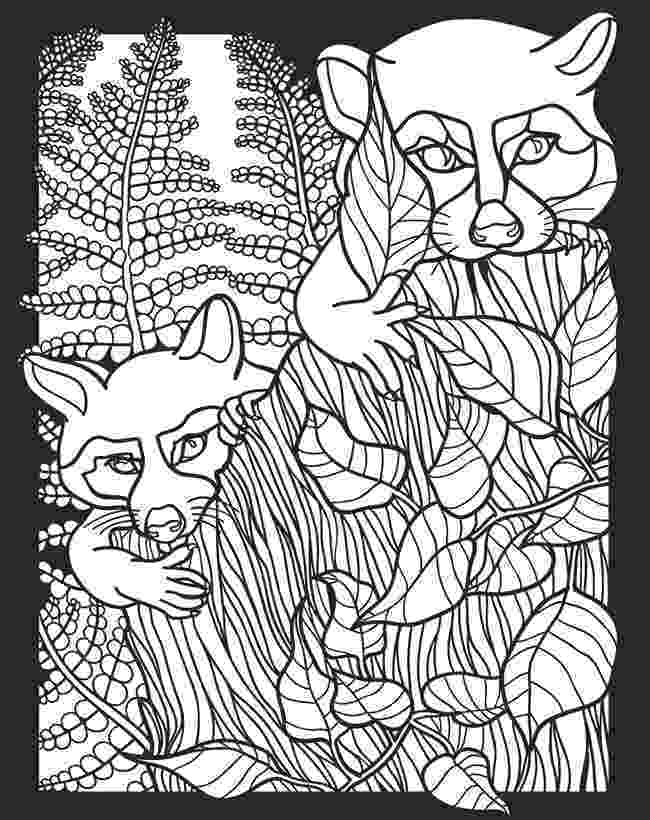nocturnal animals coloring pages pictures of nocturnal animals coloring home pages nocturnal coloring animals