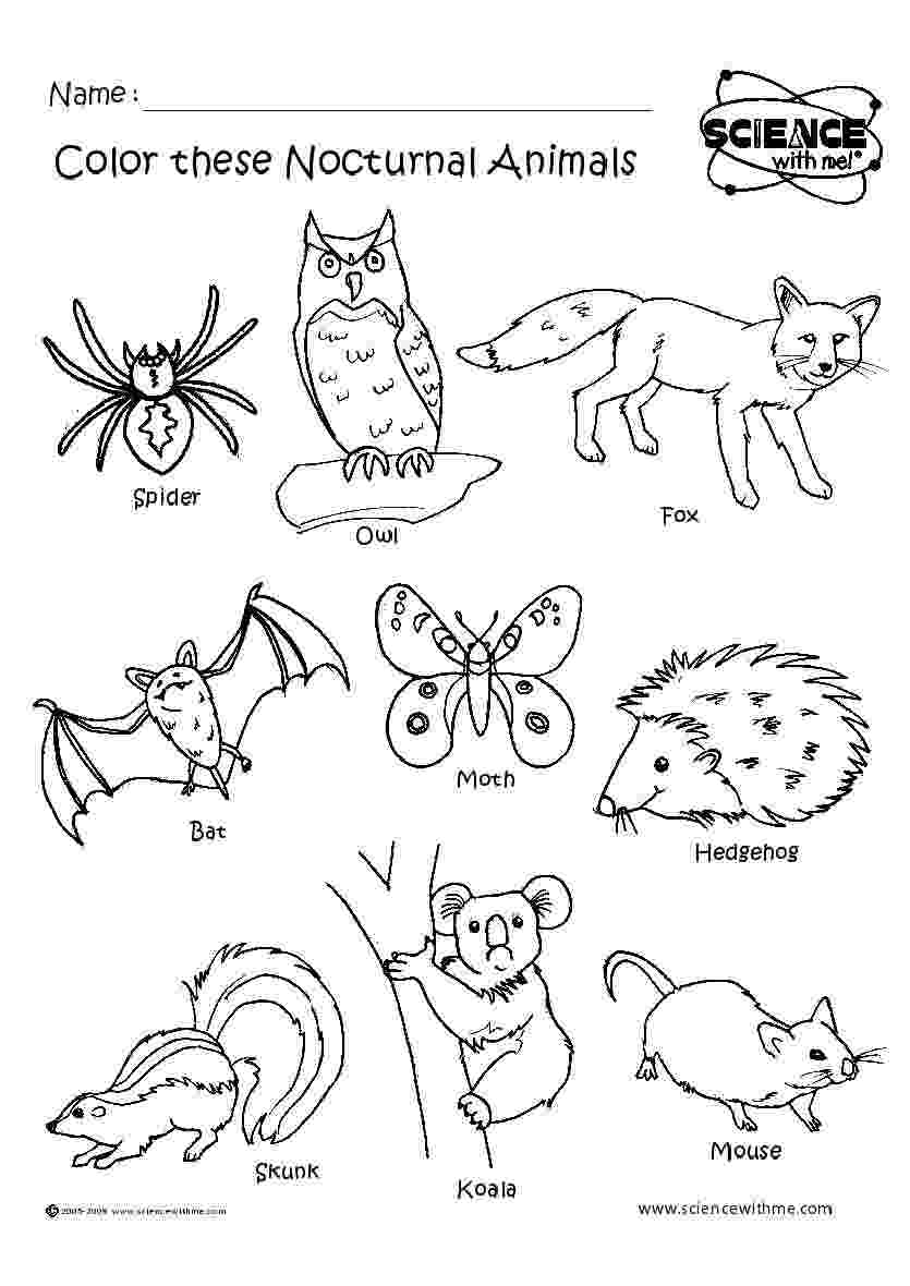 nocturnal animals colouring sheets nocturnal animals coloring page twisty noodle sheets colouring nocturnal animals