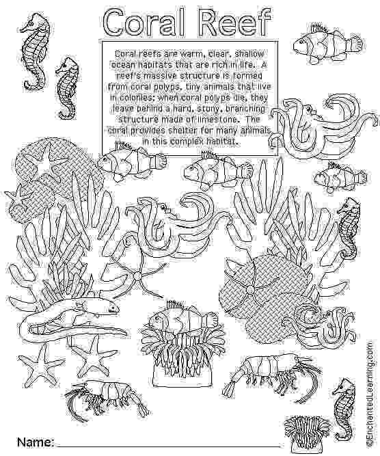 ocean plants coloring pages gallery for gt seaweed outline time to party pinterest plants ocean coloring pages