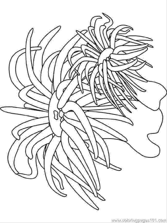 ocean plants coloring pages ocean coloring pages coloring pages sea anemone natural plants coloring ocean pages