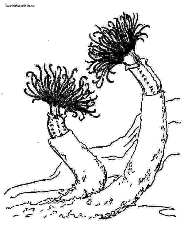 ocean plants coloring pages sea grass coloring pages coloring pages pages plants ocean coloring