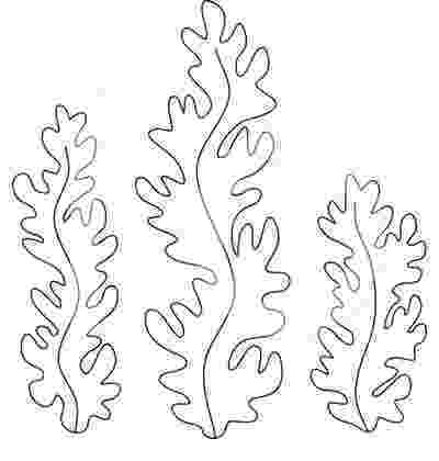 ocean plants coloring pages sea life drawing at getdrawingscom free for personal ocean plants coloring pages