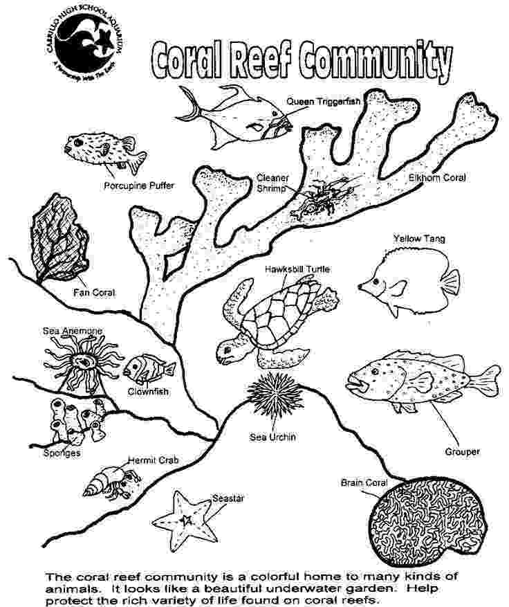 ocean plants coloring pages sea plants drawing at getdrawingscom free for personal ocean plants coloring pages
