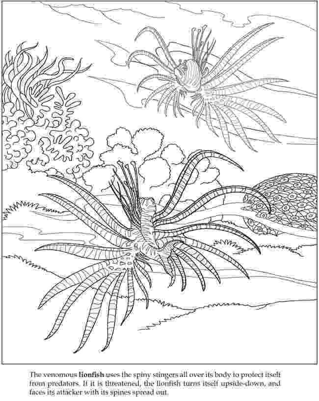 ocean plants coloring pages sea plants drawing at getdrawingscom free for personal plants pages coloring ocean