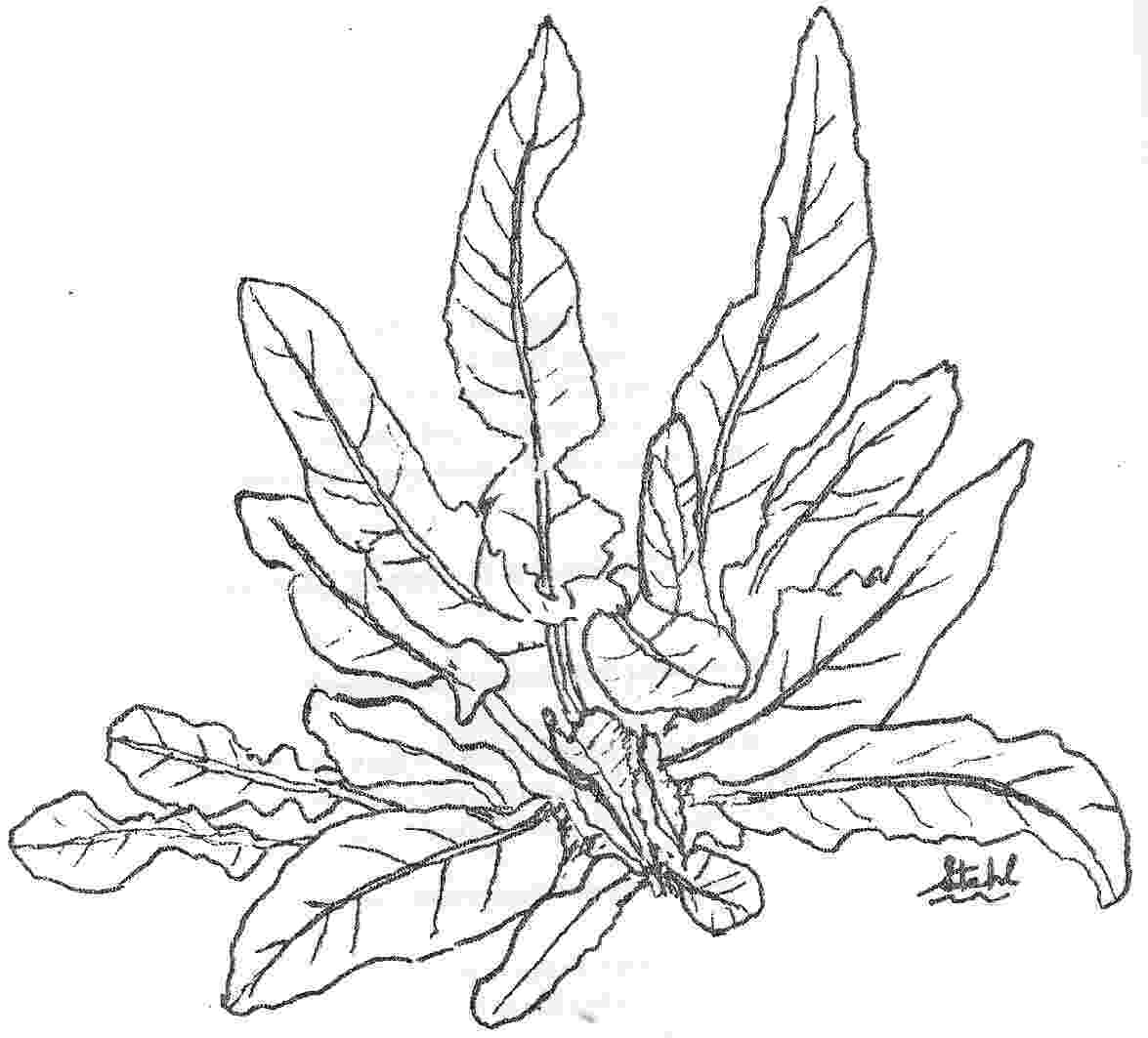 ocean plants coloring pages seaweed coloring pages getcoloringpagescom pages ocean coloring plants