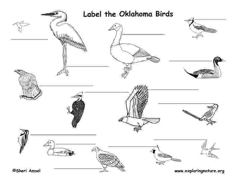 oklahoma state bird oklahoma habitats mammals birds amphibians reptiles bird oklahoma state