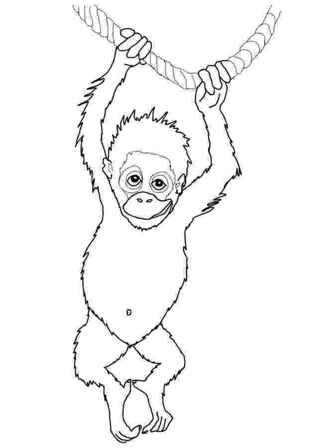 orangutan coloring page coloring pages wildlife research conservation coloring orangutan page