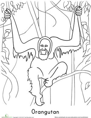 orangutan coloring page miss sarah39s storytime stem olivia the orangutan folder page orangutan coloring