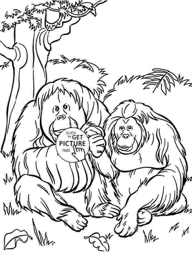 orangutan coloring page orangutan coloring pages kidsuki coloring orangutan page