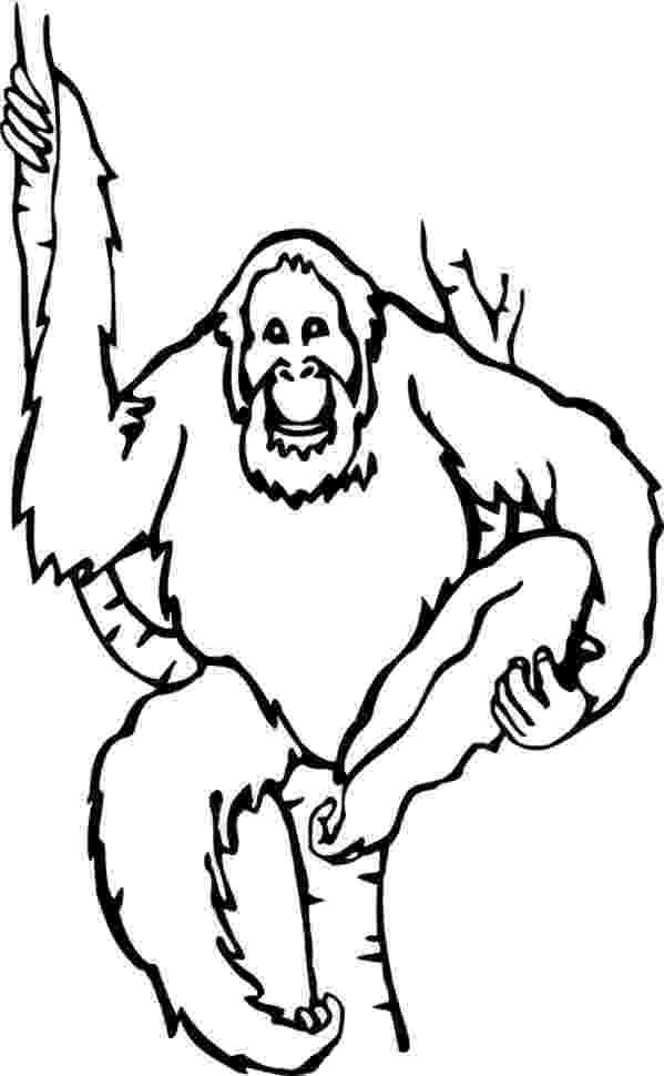 orangutan coloring page orangutan coloring pages kidsuki orangutan page coloring