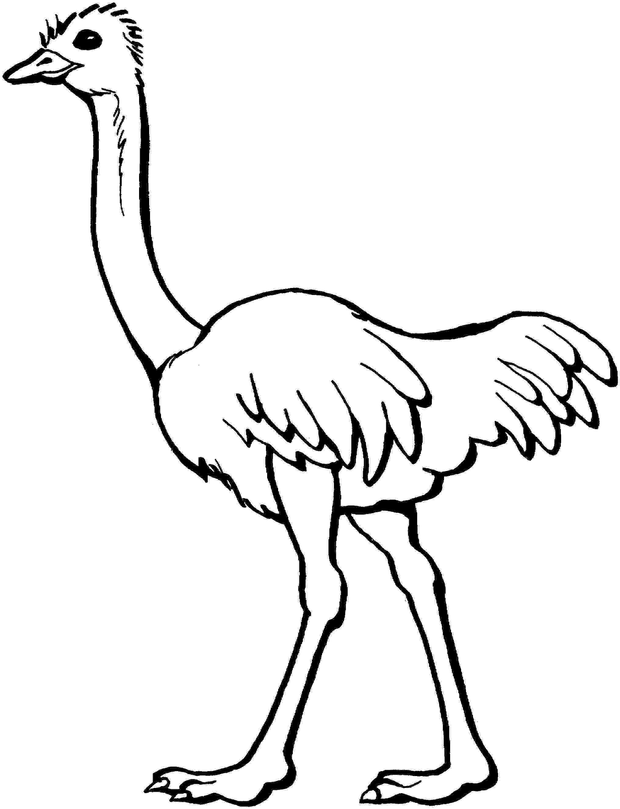 ostrich coloring page free printable ostrich coloring pages for kids coloring ostrich page 1 1
