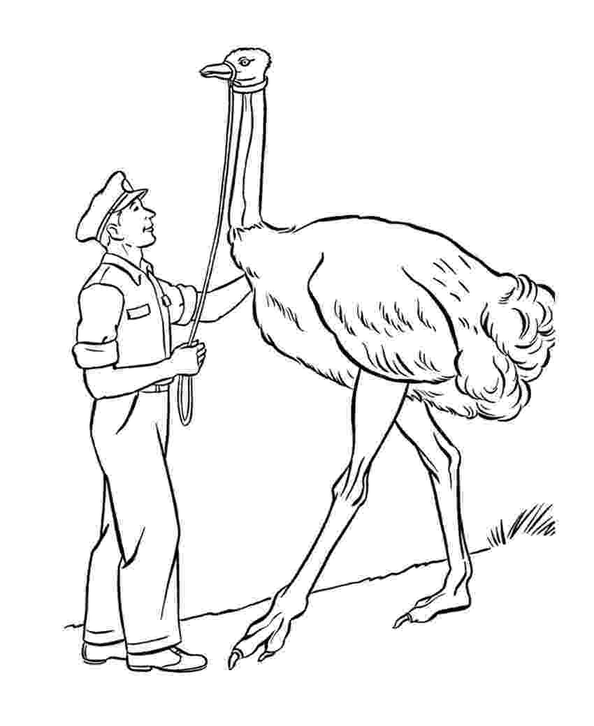 ostrich coloring page free printable ostrich coloring pages for kids page coloring ostrich