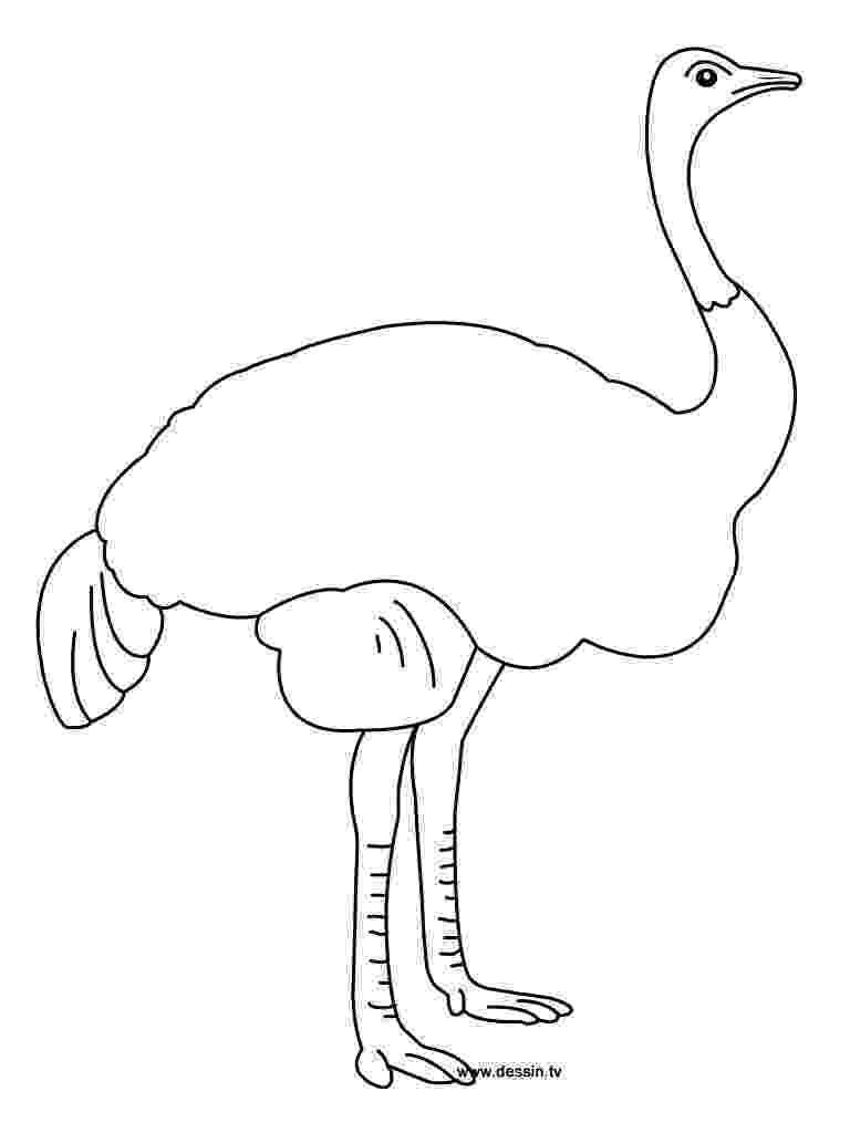 ostrich coloring page free printable ostrich coloring pages for kids page coloring ostrich 1 1
