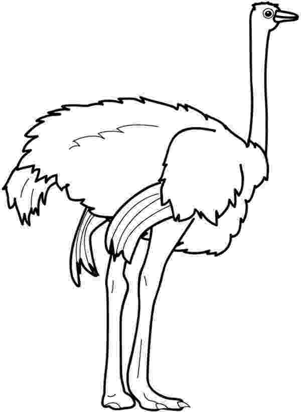 ostrich coloring page ostrich coloring pages chocolate bar page ostrich coloring