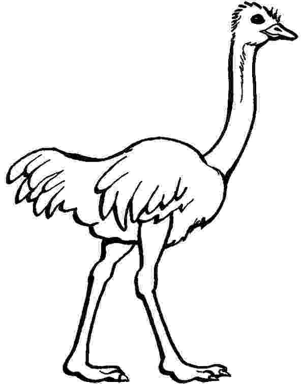 ostrich coloring page ostrich coloring pages ostrich page coloring
