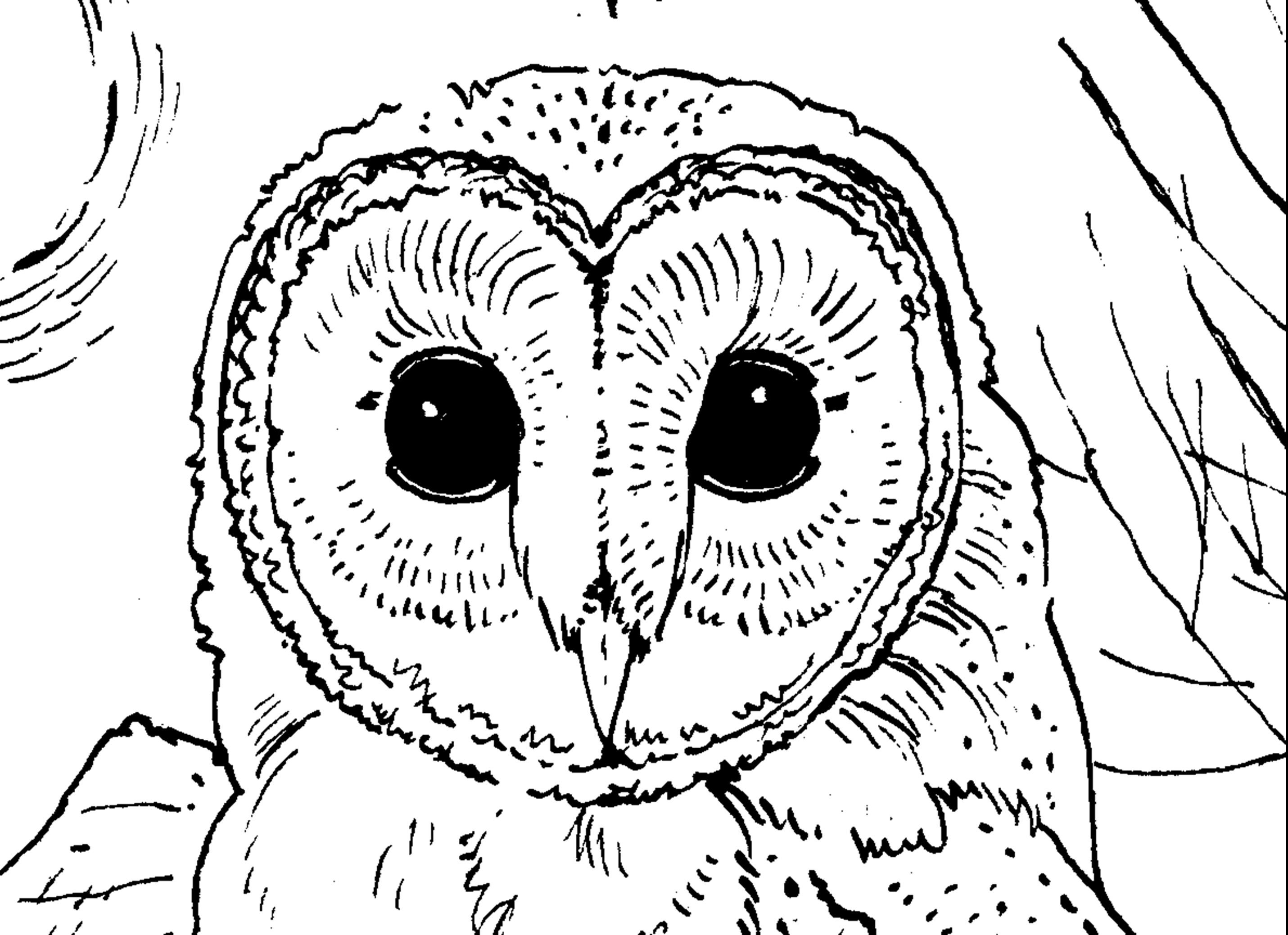 owl cartoon coloring pages cartoon owl coloring pages clipart library coloring pages cartoon owl
