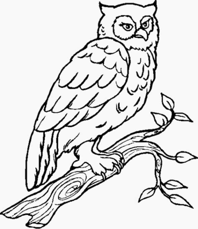 owl color page cartoon owl coloring page free printable coloring pages owl color page