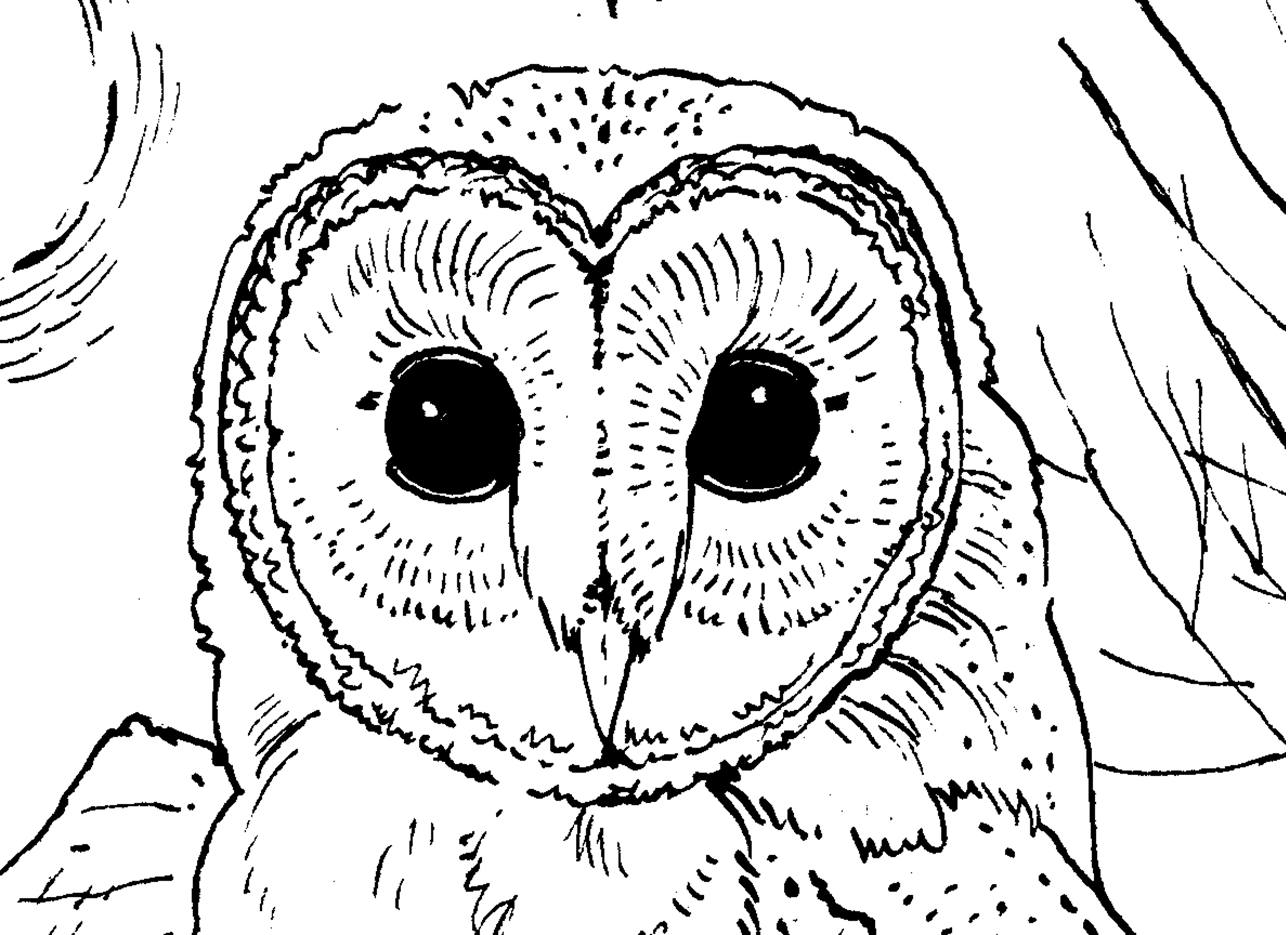 owl printable christmas owl with gift boxes coloring page free printable owl