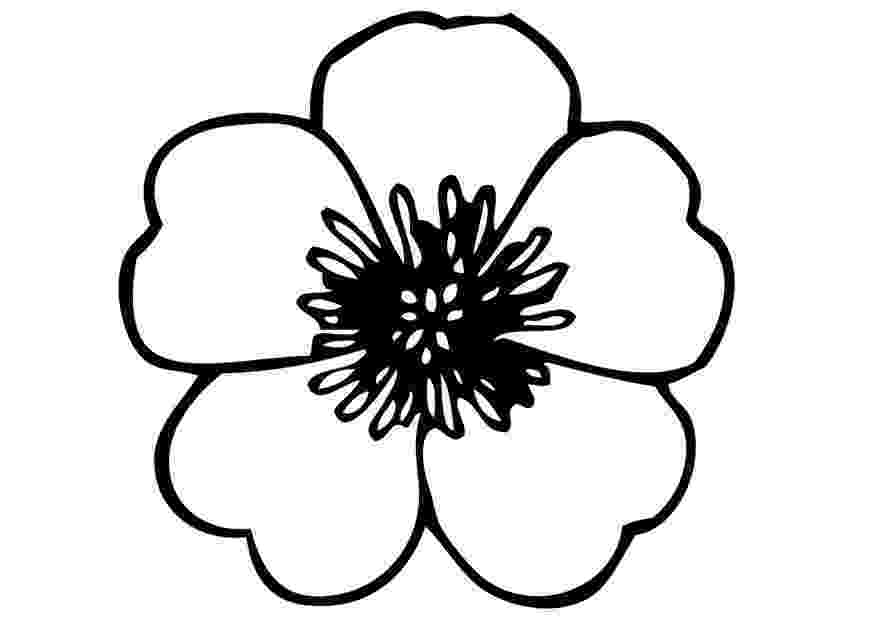 pansy coloring page 15 best images about pansies on pinterest how to draw coloring pansy page
