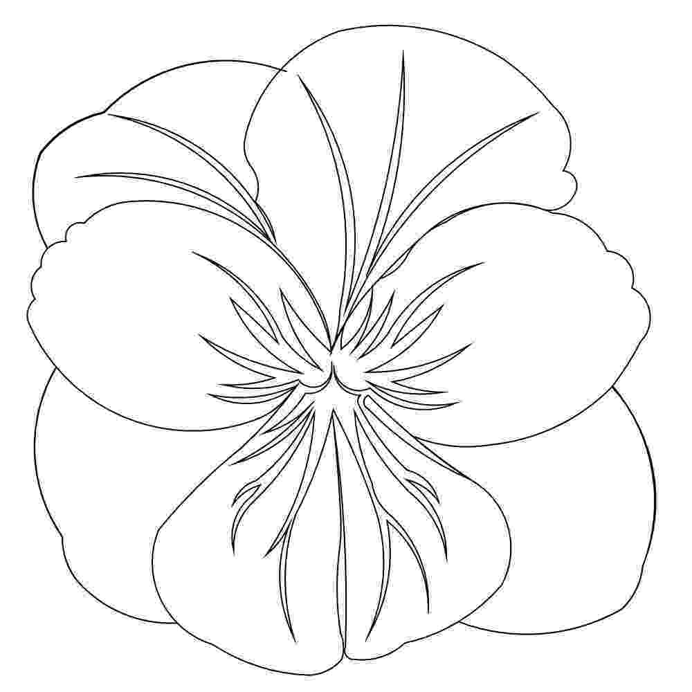 pansy coloring page beautiful printable flowers coloring pages pansy coloring page
