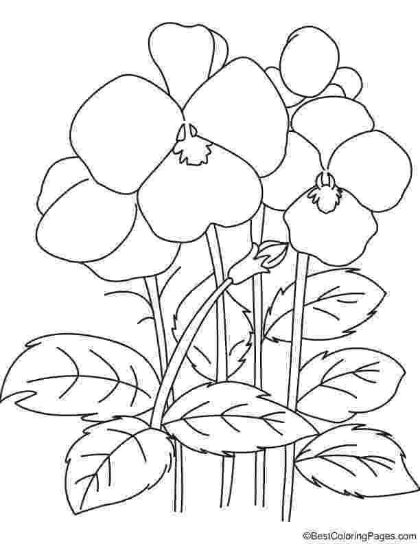 pansy coloring page flower page printable coloring sheets printable flowers pansy coloring page