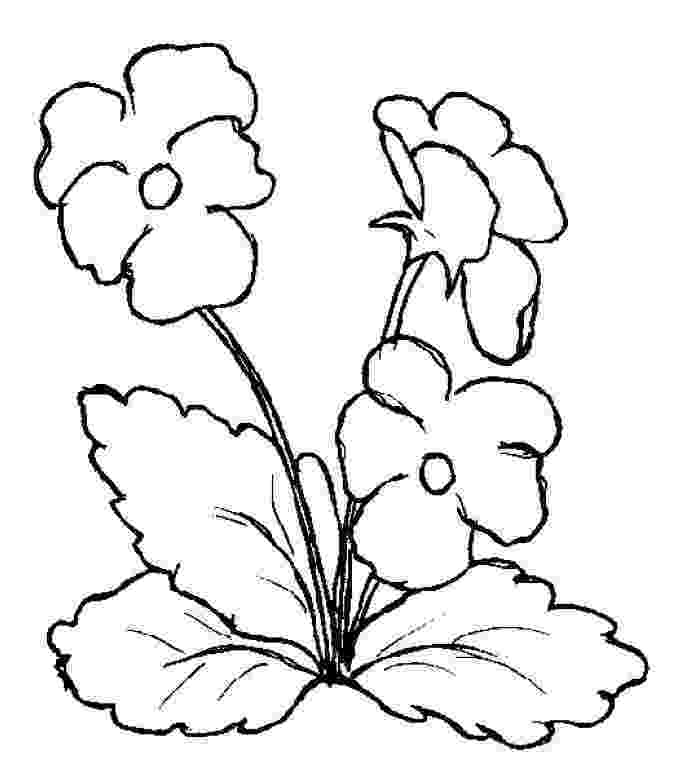 pansy coloring page garden pansy coloring page free printable coloring pages pansy page coloring