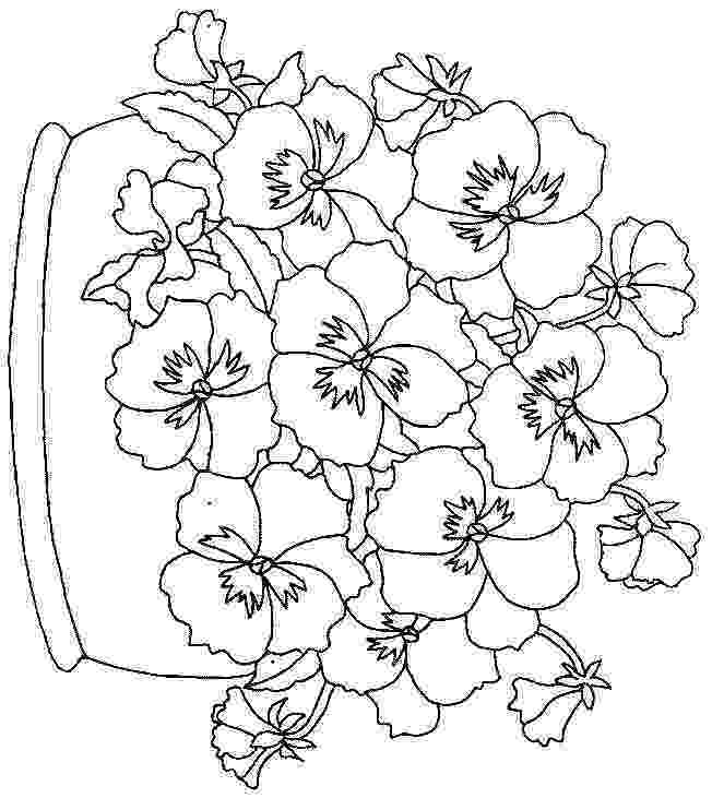 pansy coloring page isaiah 5512 lilies and pansies color the bible coloring page pansy