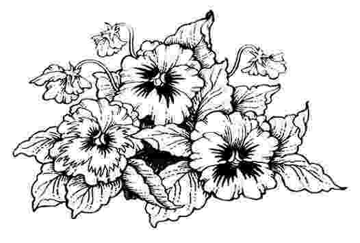 pansy coloring page new pansy rubber stamp designs for penny black ca coloring page pansy