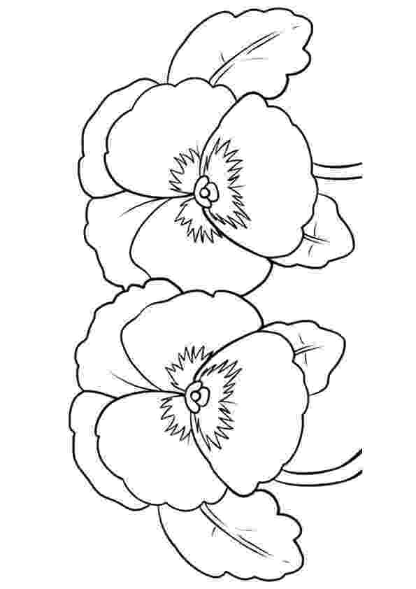 pansy coloring page pansies coloring pages coloring pages to download and print page coloring pansy