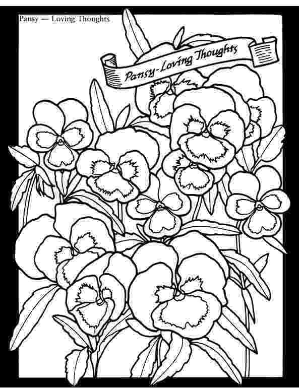 pansy coloring page pansies coloring pages coloring pages to download and print pansy page coloring