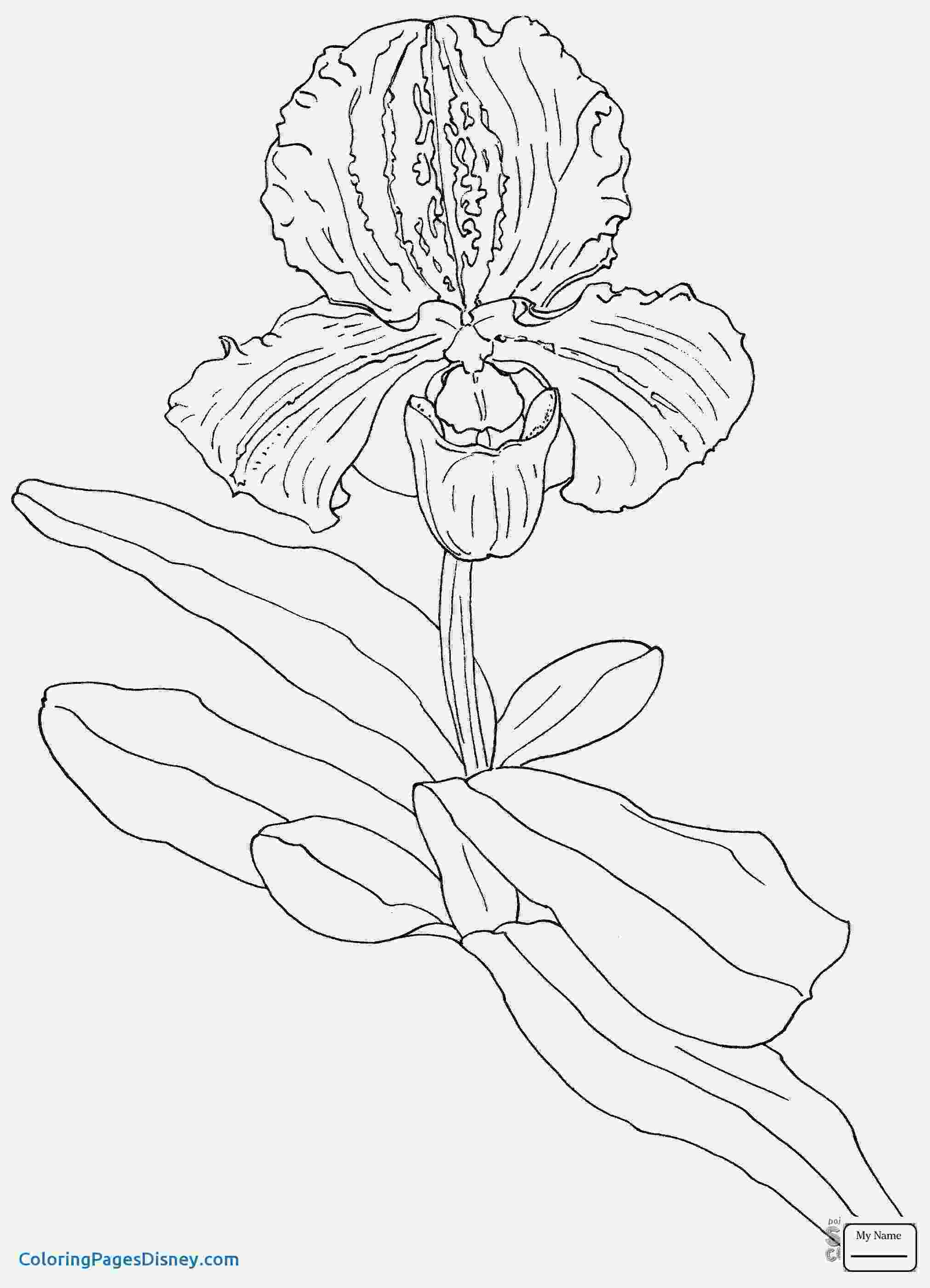 pansy coloring page pansy coloring page coloringcrewcom coloring pansy page