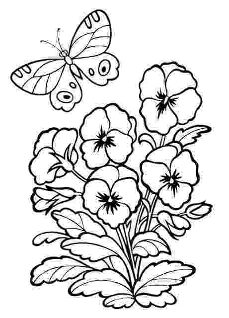 pansy coloring page pansy flower coloring page at getcoloringscom free coloring page pansy