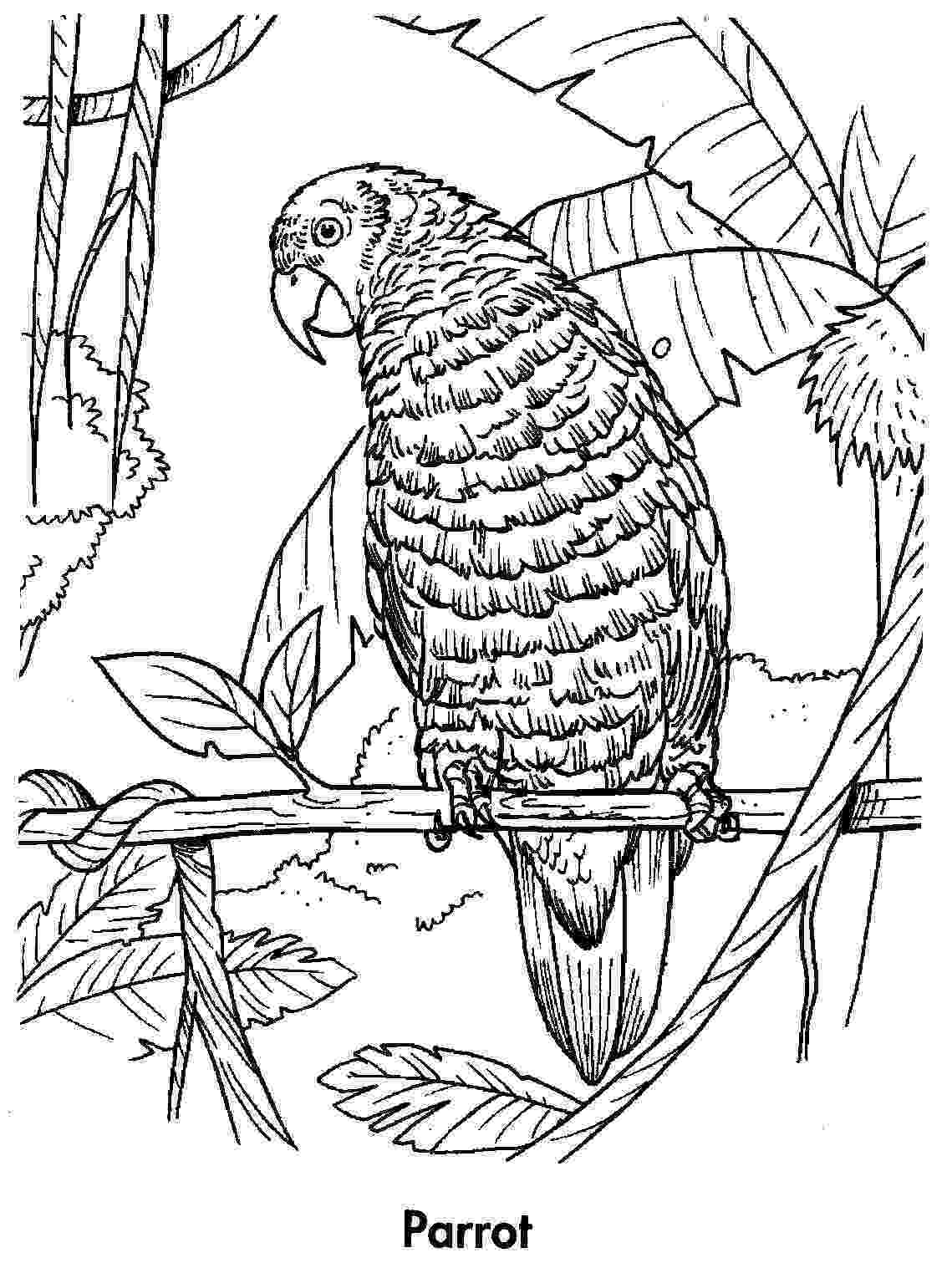 parrot printable free printable parrot coloring pages for kids parrot printable 1 1