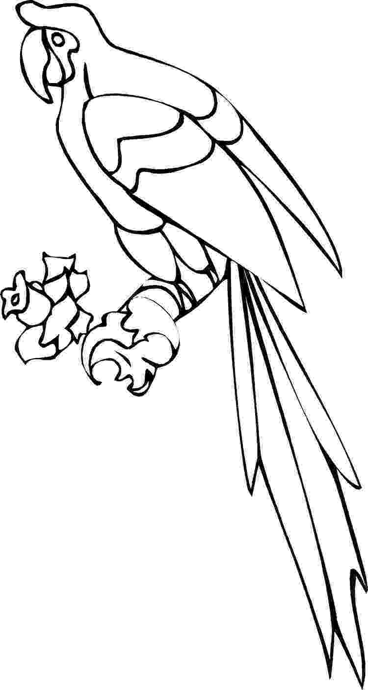 parrot printable free printable parrot coloring pages for kids parrot printable 1 3