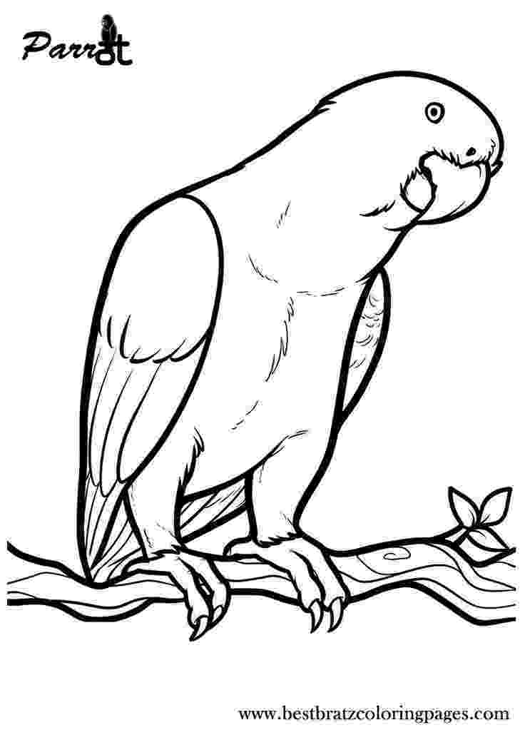 parrot printable hd animals parrot bird coloring pages parrot printable
