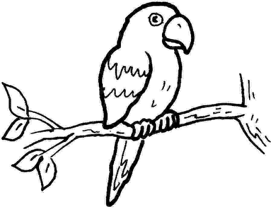 parrot printable printable parrot coloring pages for kids cool2bkids parrot printable