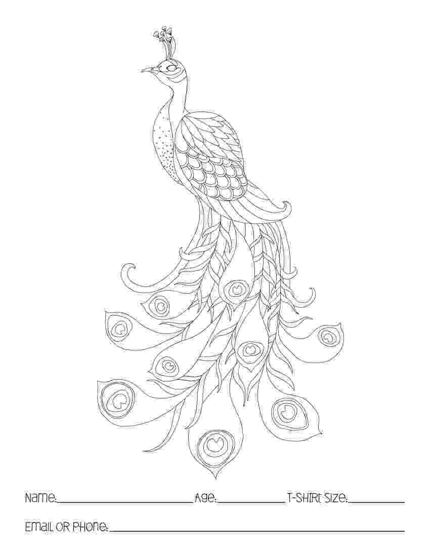 peacock coloring page peacock feathers coloring pages download and print for free peacock page coloring