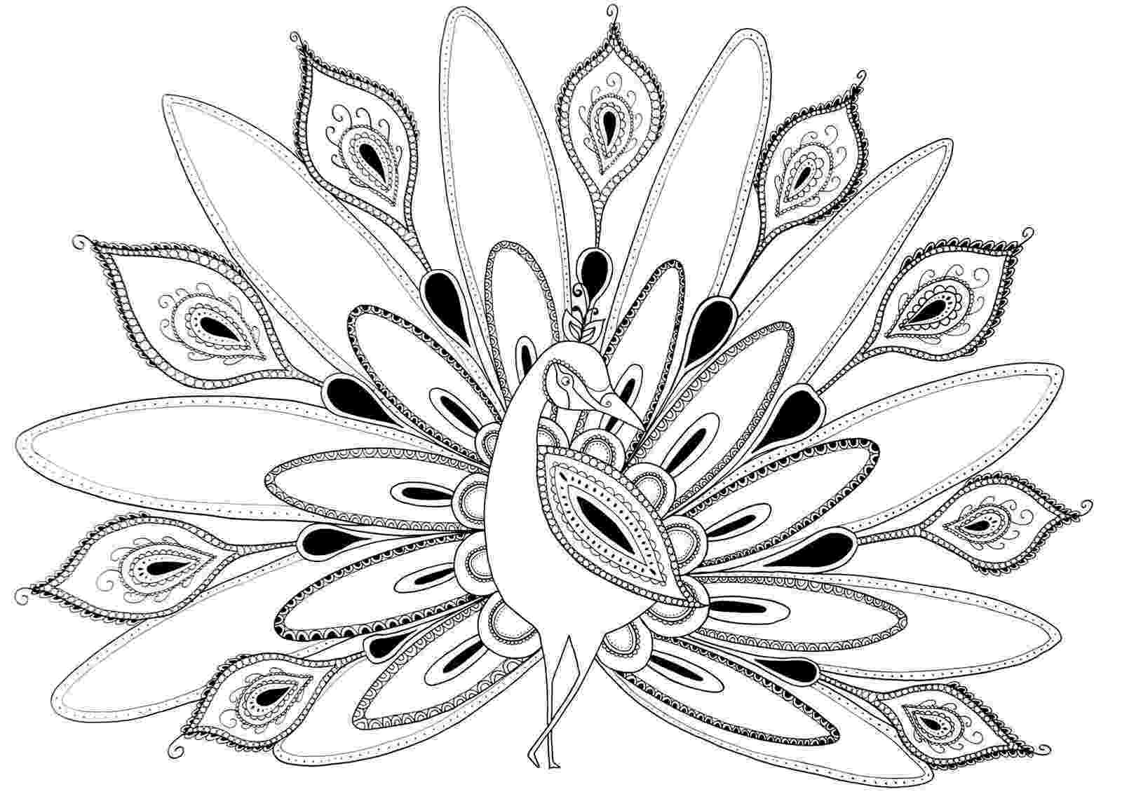 peacock coloring page peacock in flowers coloring page free printable coloring page peacock coloring
