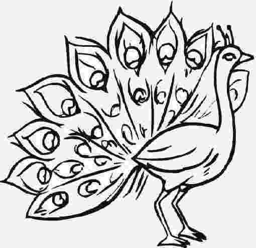 peacock coloring page peacocks to print for free peacocks kids coloring pages page coloring peacock